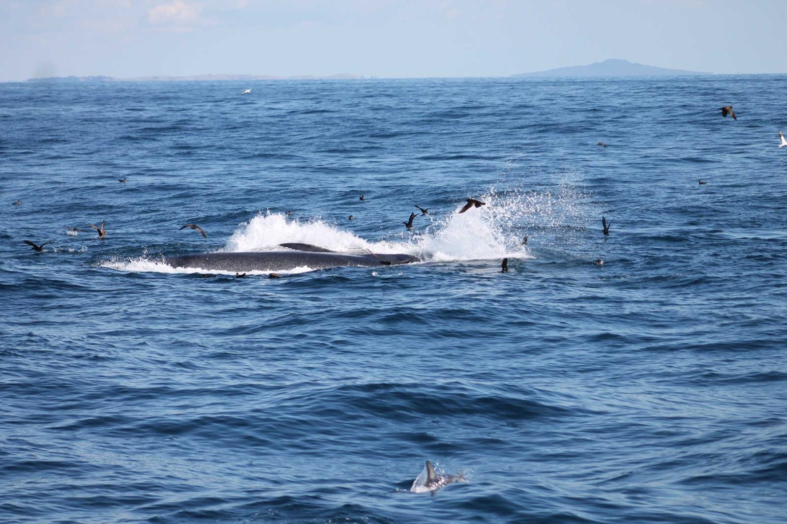 Ocean Acoustics, Expert Scientific Services, Underwater Marine Acoustic Consulting